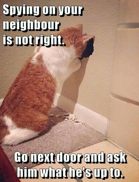 caturday meme about spying on your neighbors