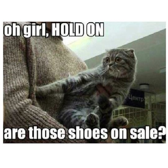 caturday meme about noticing shoes on sale