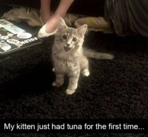 caturday meme about kitten's first tuna