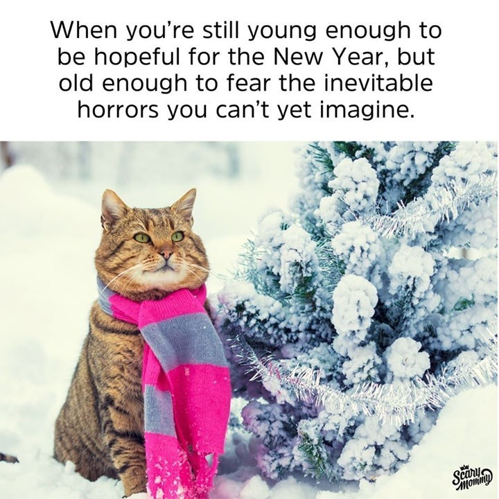 caturday meme about fearing the future with a cat wearing a scarf in the snow