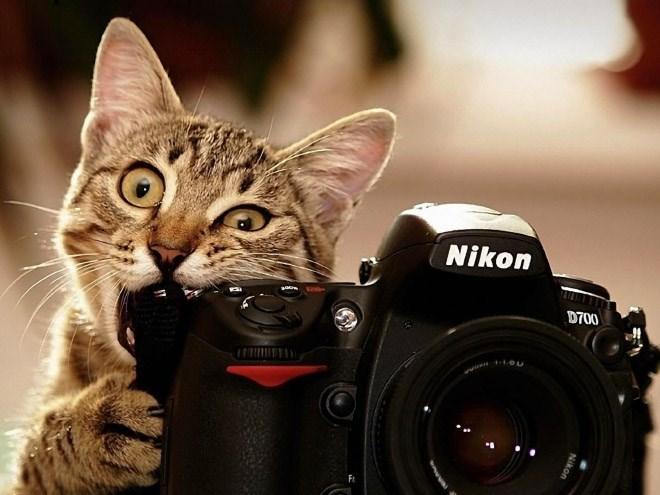 Camera - Nikon D700 Nikon