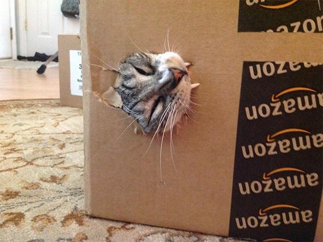 Cat - amazon amazon amazon mazon mazon TI