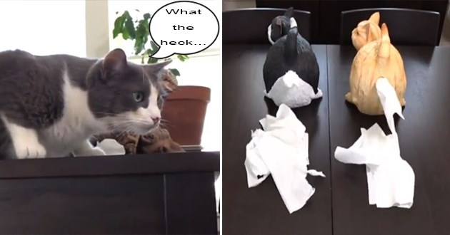cats butt tissue dispenser