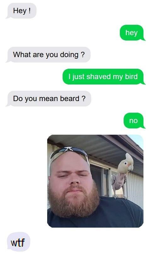 Product - Hey! hey What are you doing? I just shaved my bird Do you mean beard? no wtf