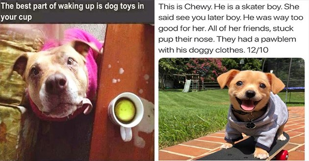 doggo dog funny memes