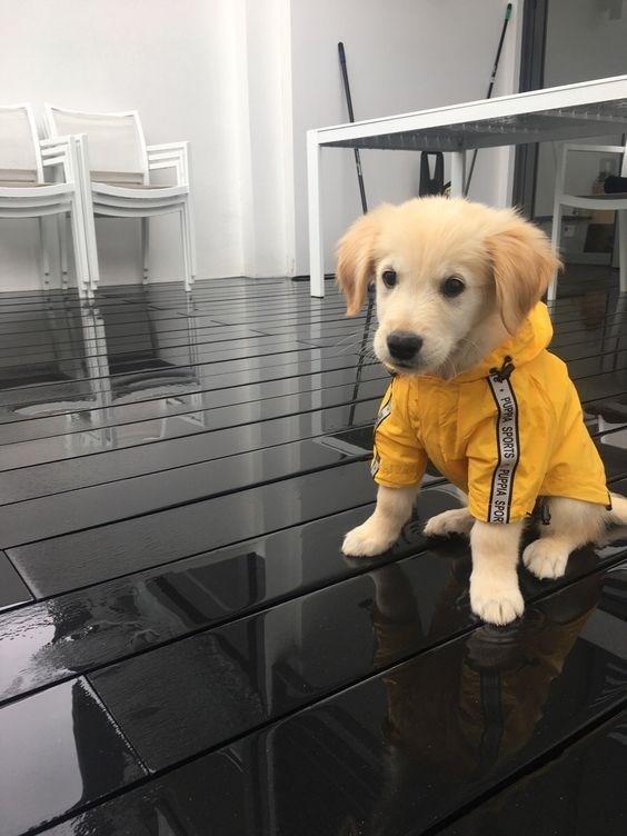 pets in rain coats - Dog - PUPPA SPORTS PUPPIA SPOR