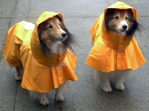 pets in rain coats - Dog clothes