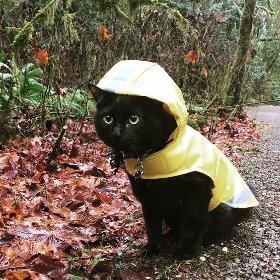 pets in rain coats - Black cat