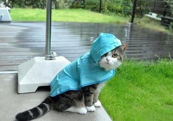 pets in rain coats - Cat