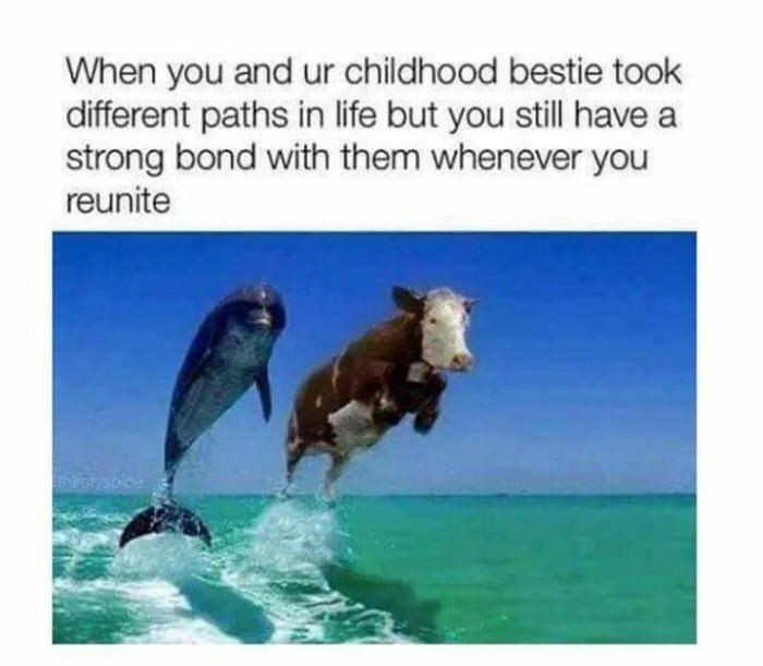 wholesome meme - Dolphin - When you and ur childhood bestie took different paths in life but you still have a strong bond with them whenever you reunite