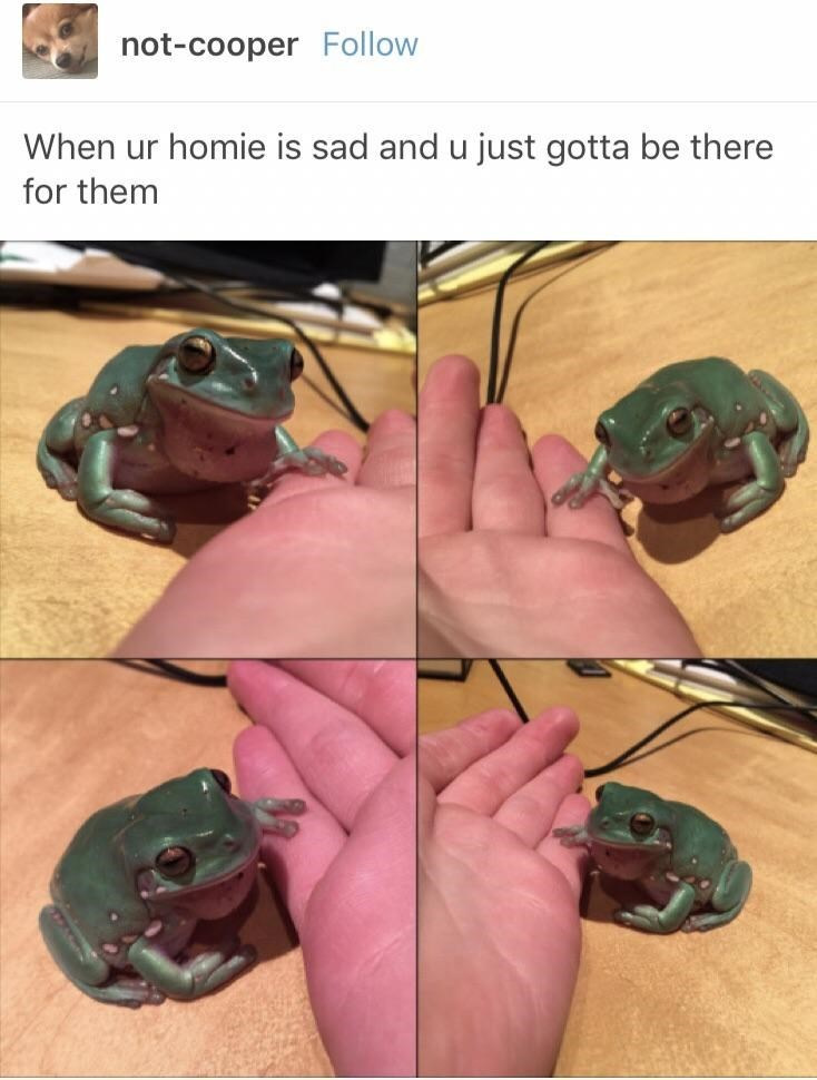 wholesome meme - Finger - not-cooper Follow When ur homie is sad and u just gotta be there for them