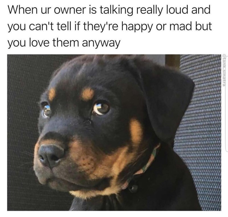 wholesome meme - Dog - When ur owner is talking really loud and you can't tell if they're happy or mad but you love them anyway @tank.sinatra