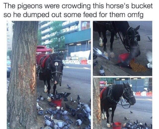 wholesome meme - Horse - The pigeons were crowding this horse's bucket so he dumped out some feed for them omfg NEEER