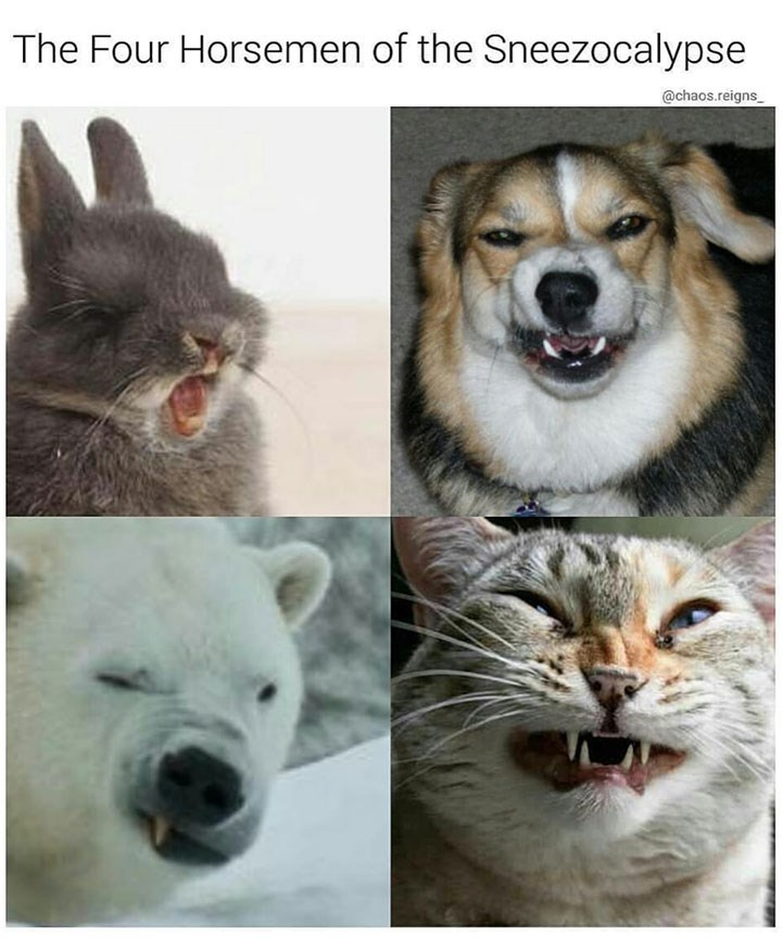 Sunday meme of a rabbit, dog, polar bear and a cat about to sneeze