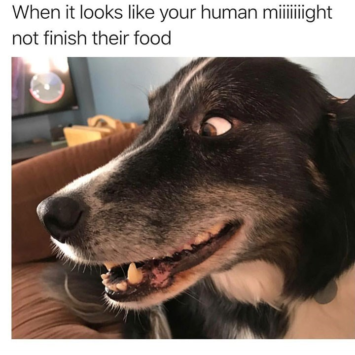 sunday meme of a dog that looks excited about there being extra food