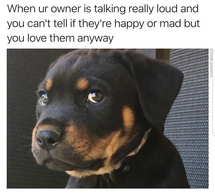 sunday meme of a puppy making a skeptical facial expression