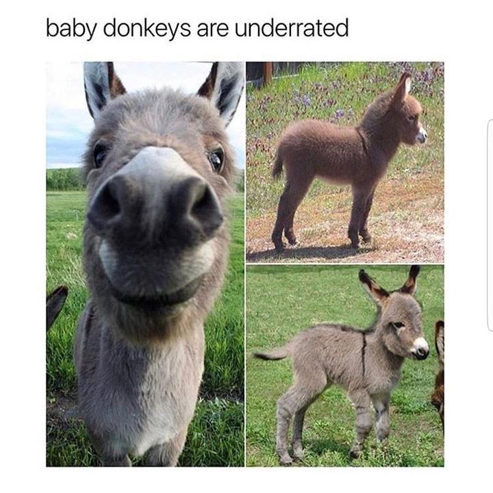 sunday meme of a cute baby donkey