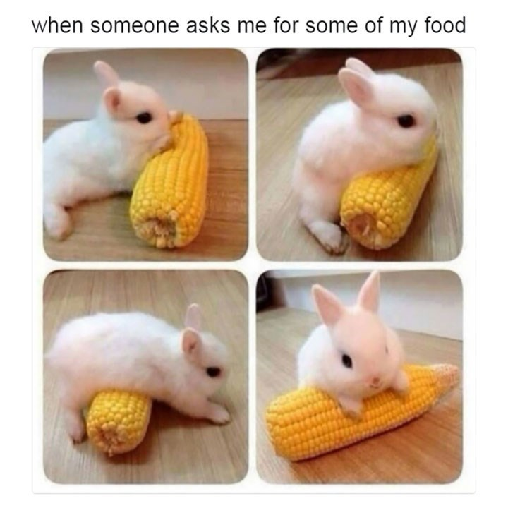 sunday meme of a bunny rolling over a corn on the cob