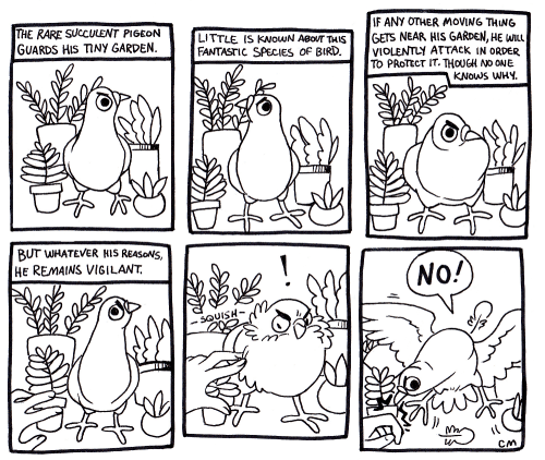Text - IF ANY OTHER MOVING THING GETS NEAR HIS GARDEN, HE WLL VIOLENTLY ATTACK IN ORDER TO PROTECT IT. THOUGH NO ONE KNOWS WHY. THE RARE SUCCULENT PIGEON GUARDS HIS TINY GARDEN. LITTLE IS KNOWN ABOUT THIS FANTASTIC SPECIES OF BIRD. BUT WHATEVER HIS REASONS, HE REMAINS VIGILANT NO! SQUISH CM