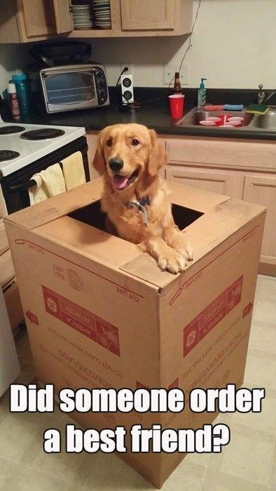 Dog - Did someone order abest friend?