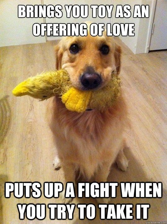 Dog - BRINGS YOU TOY AS AN OFFERING OF LOVE PUTSUPA FIGHT WHEN YOUTRY TO TAKEIT quickmeme.com