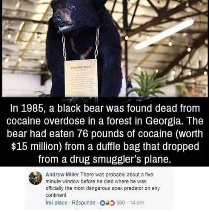 Funny meme about a bear on cocaine.