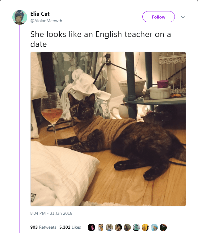 Cat - Elia Cat Follow @AlolanMeowth She looks like an English teacher on a date 8:04 PM -31 Jan 2018 903 Retweets 5,302 Likes