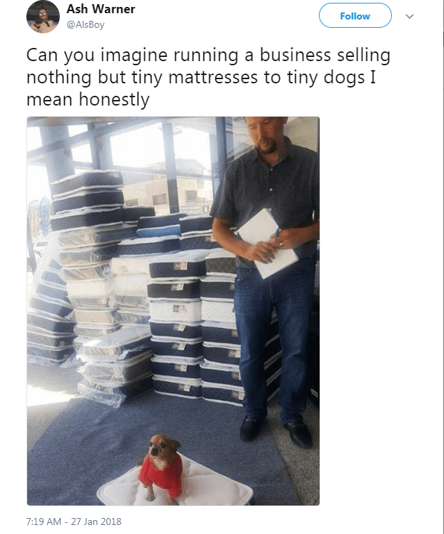 Product - Ash Warner Follow @Als Boy Can you imagine running a business selling nothing but tiny mattresses to tiny dogs I mean honestly 7:19 AM - 27 Jan 2018