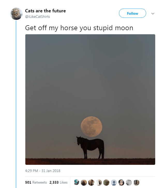 Text - Cats are the future Follow @iLikeCatShirts Get off my horse you stupid moon 4:29 PM -31 Jan 2018 Ysa 501 Retweets 2,333 Likes