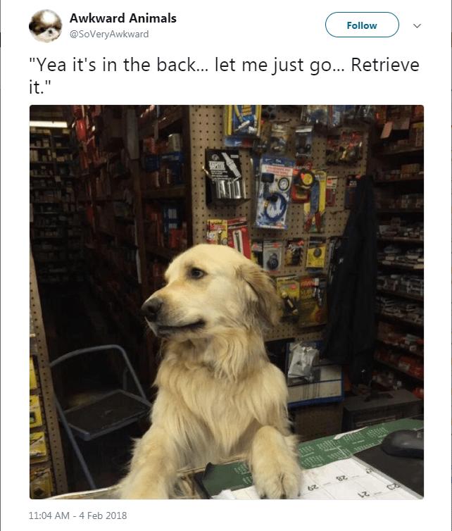 "Vertebrate - Awkward Animals Follow @SoVeryAwkward ""Yea it's in the back... let me just go... Retrieve it."" APT 62 8 11:04 AM 4 Feb 2018"