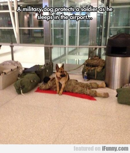 Dog - Amilitary dog protects a soldieras he sleeps in the airport featured on iFunny.com