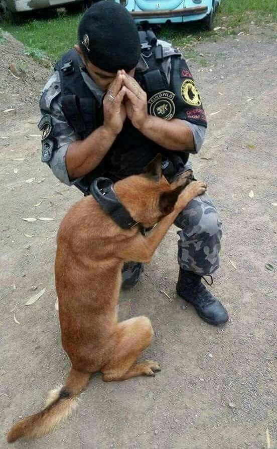 Dog - SENCHORIG OM