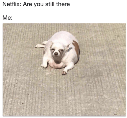netflix are you still there me