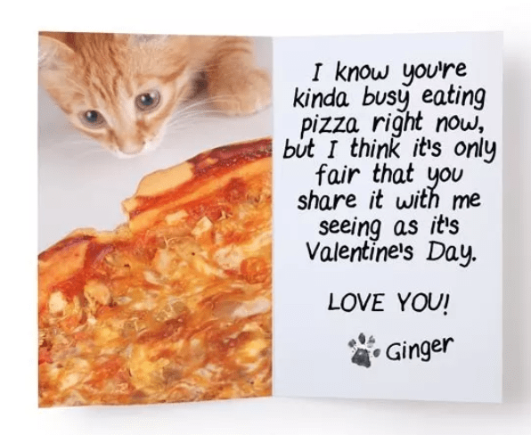 Cat - know you're kinda busy eating pizza right now, but I think it's only fair that you share it with me seeing as it's Valentine's Day. LOVE YOU! Ginger