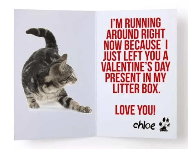 Text - I'M RUNNING AROUND RIGHT NOW BECAUSE JUST LEFT YOU A VALENTINE'S DAY PRESENT IN MY LITTER BOX. LOVE YOU! chloe