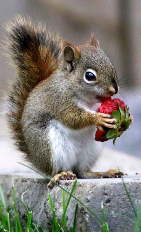 cute animals eating - Squirrel