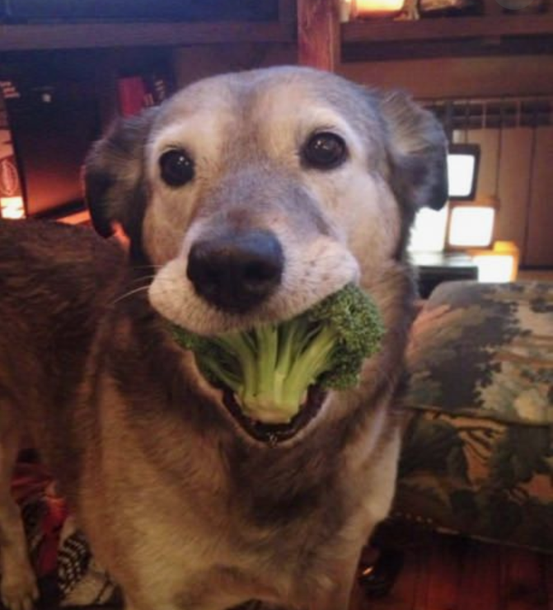 cute animals eating - Dog