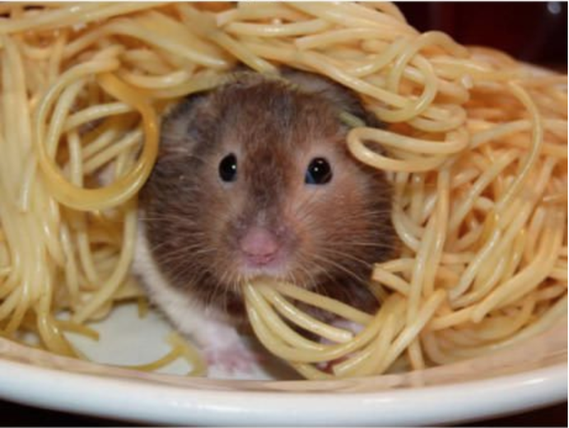 cute animals eating - Mouse
