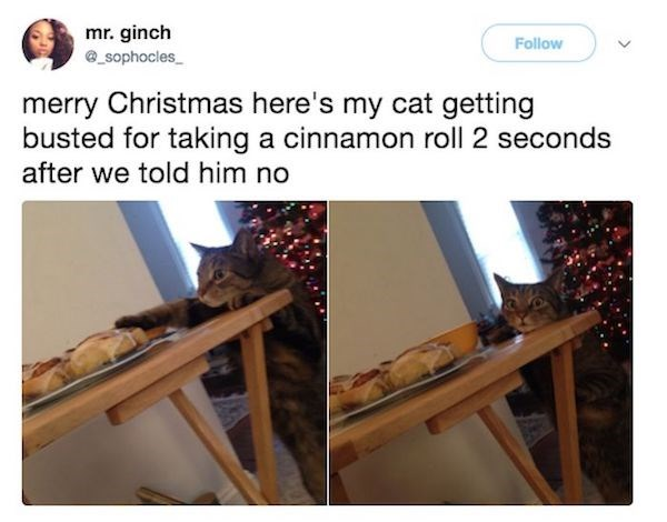 Product - mr. ginch Follow _sophocles merry Christmas here's my cat getting busted for taking a cinnamon roll 2 seconds after we told him no