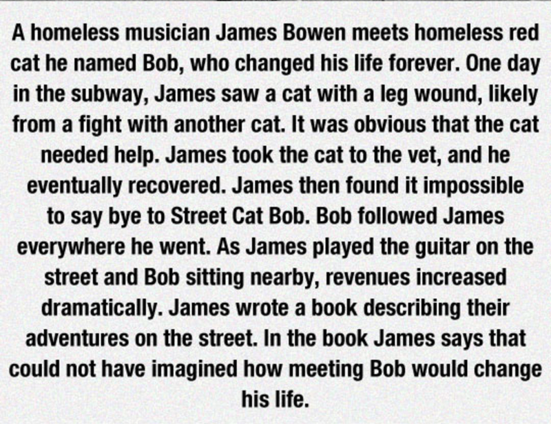 Text - A homeless musician James Bowen meets homeless red cat he named Bob, who changed his life forever. One day in the subway, James saw a cat with a leg wound, likely from a fight with another cat. It was obvious that the cat needed help. James took the cat to the vet, and he eventually recovered. James then found it impossible to say bye to Street Cat Bob. Bob followed James everywhere he went. As James played the guitar on the street and Bob sitting nearby, revenues increased dramatically.