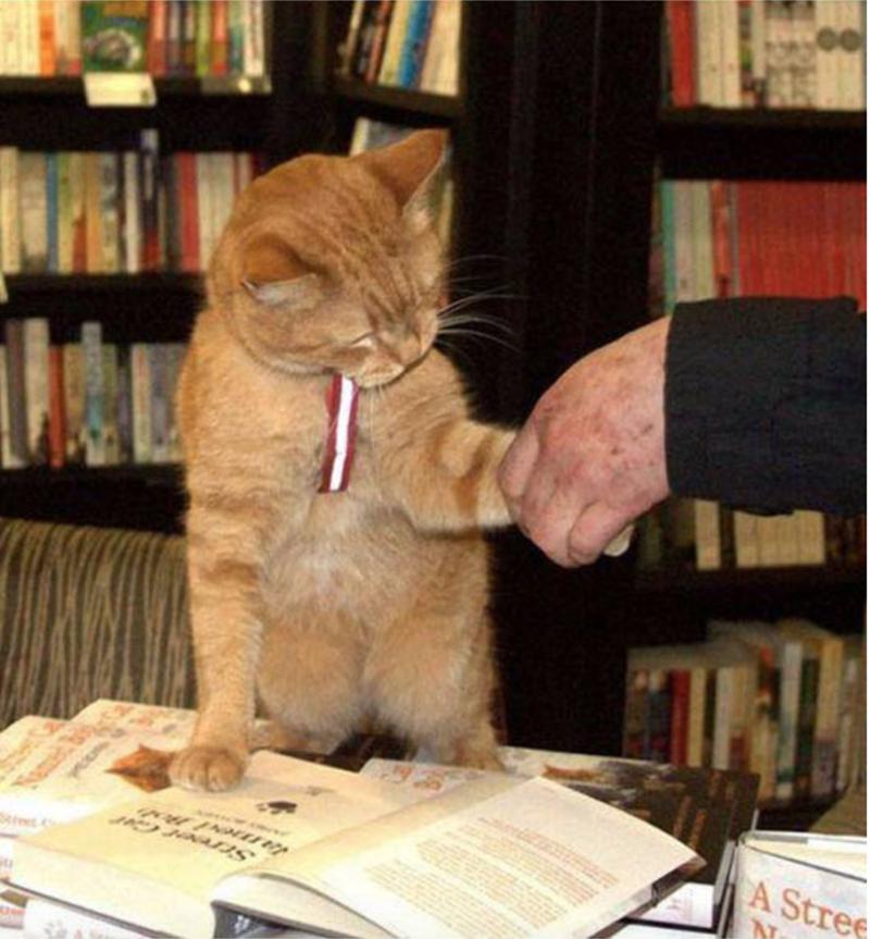 Cat - A Stree ta