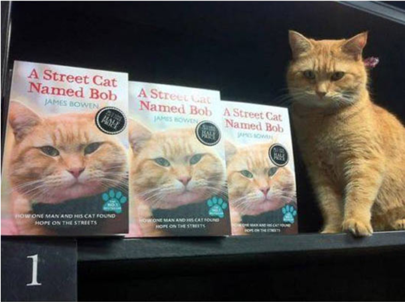 Cat - A Street Cat Named Bob A Street Ca Named Bob JAMES BOWEN A Street Cat Named Bob JAMES BOEN ALE OWONE MAN AND HIS CATFOUND HOPE ON THE STREETS HOWONE MAN AND HIS CAT FOUND HOPE ON THE STREETS oNTHE 1