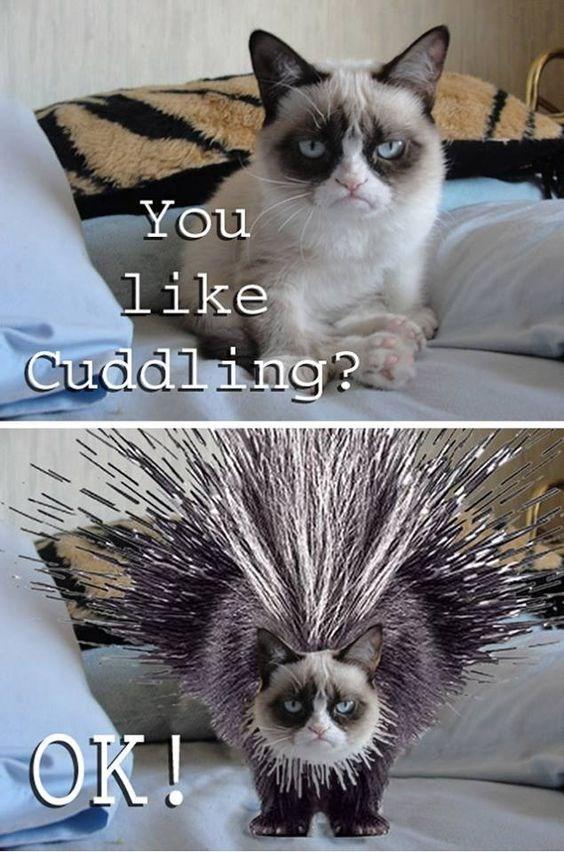 grumpy - Cat - You like Cuddling? OK!