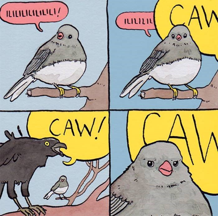 meme of a bird getting annoyed by a crow