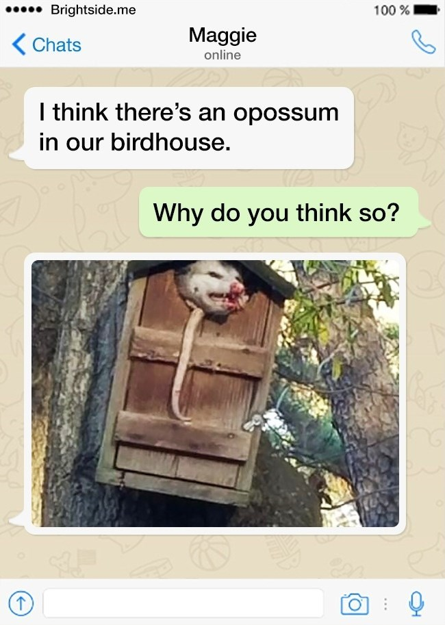 Text - Brightside.me 100% Maggie Chats online I think there's an opossum in our birdhouse. Why do you think so? QP
