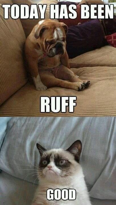 Cat - TODAY HAS BEEN RUFF GOOD