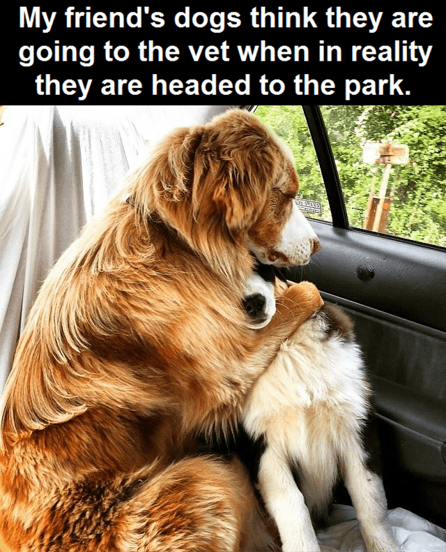 Dog - My friend's dogs think they are going to the vet when in reality they are headed to the park.