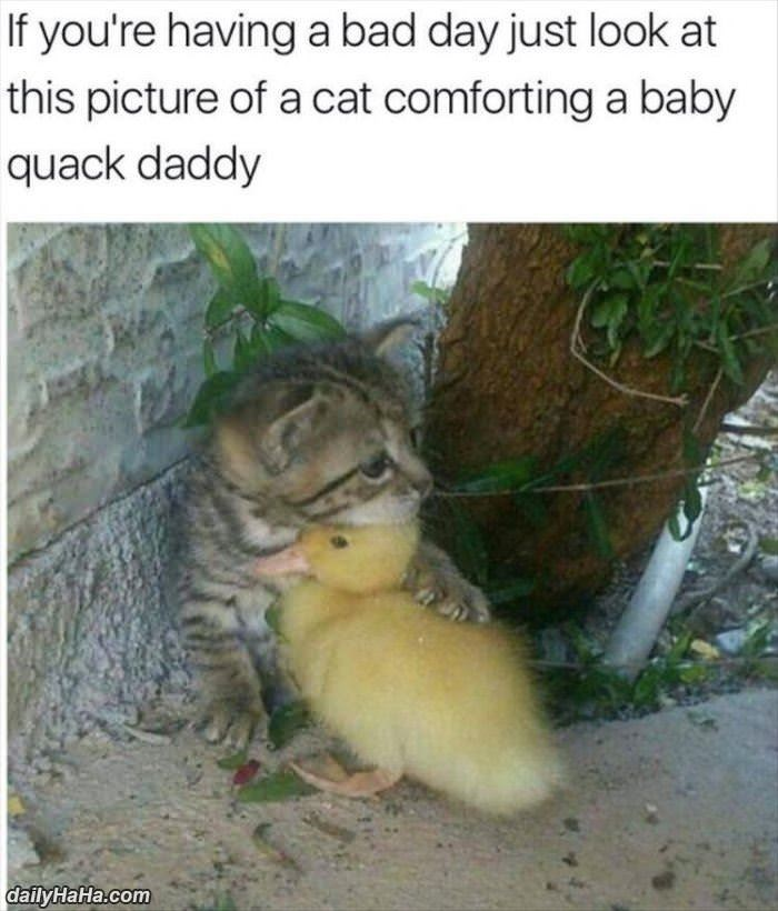 Cat - If you're having a bad day just look at this picture of a cat comforting a baby quack daddy daily HaHa.com