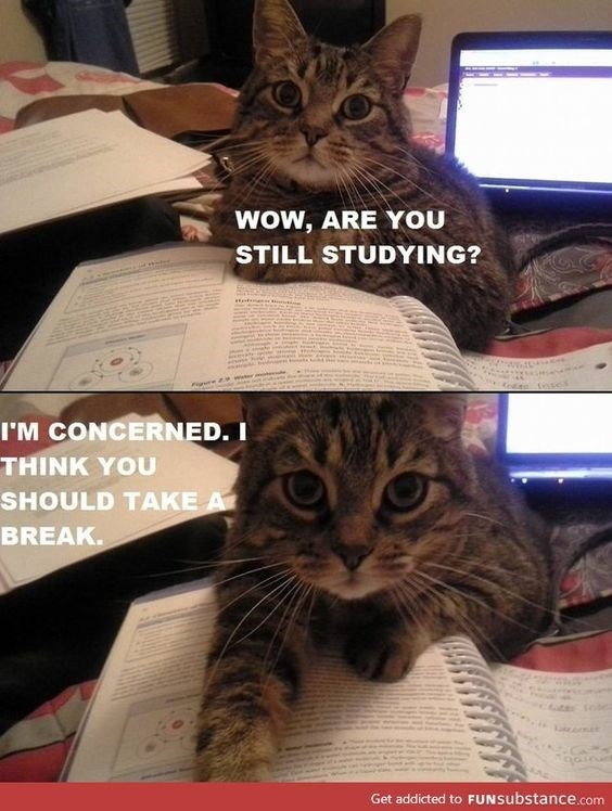 Cat - WOW, ARE YOU STILL STUDYING? I'M CONCERNED. I THINK YOU SHOULD TAKE A BREAK. Get addicted to FUNsubstance.com