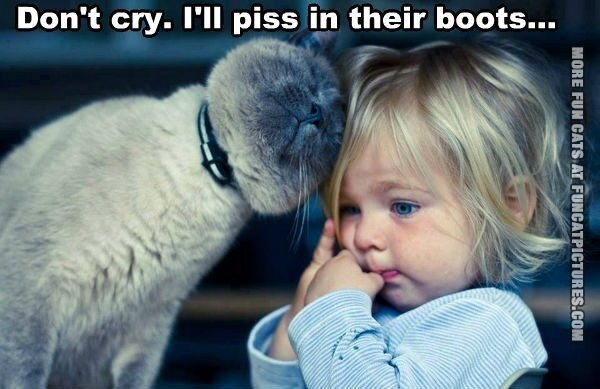 Photo caption - Don't cry. I'll piss in their boots... MORE FUN CATS AT FUNCATPICTURES.COM